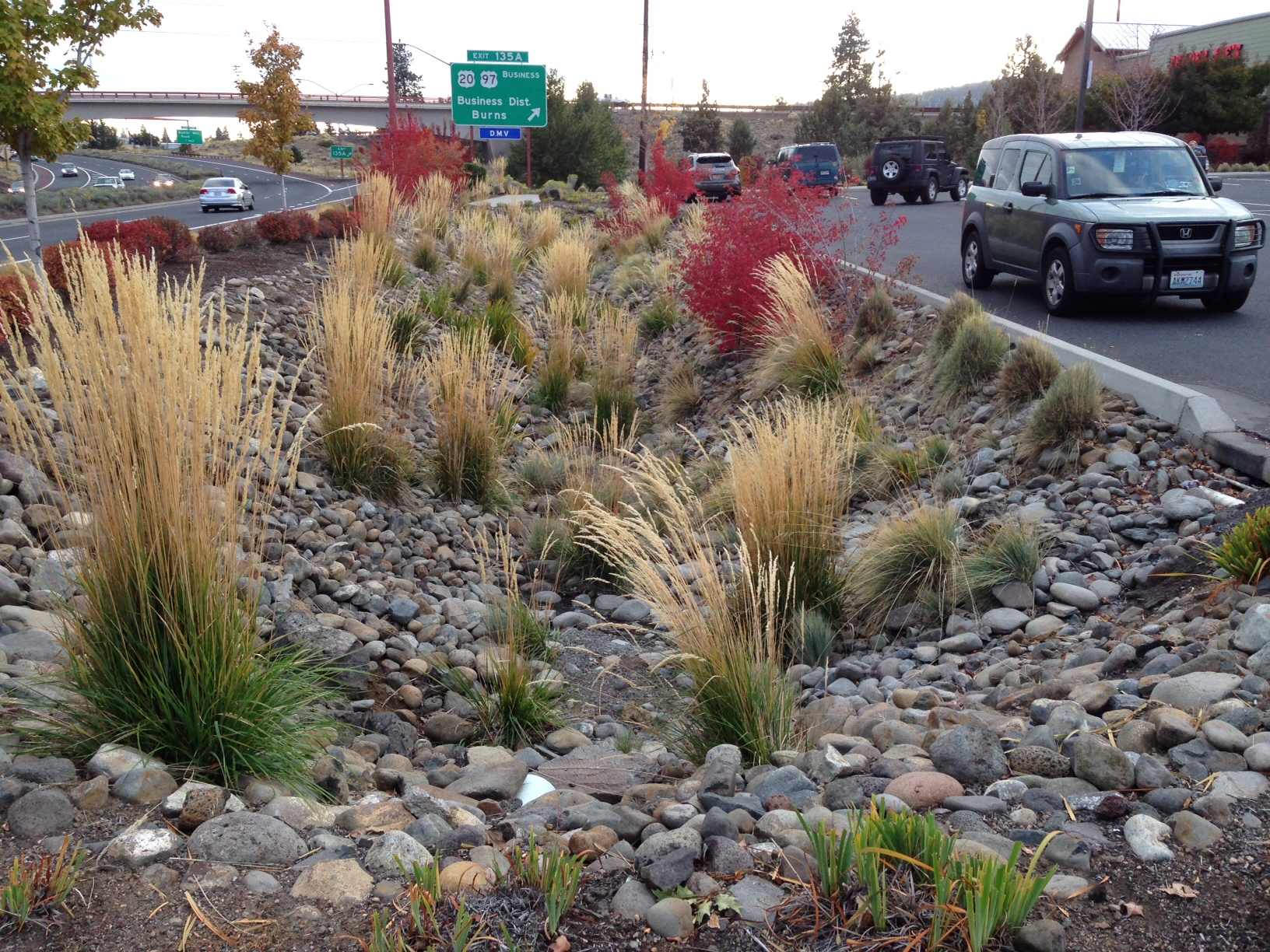 Water-catching Bioswale