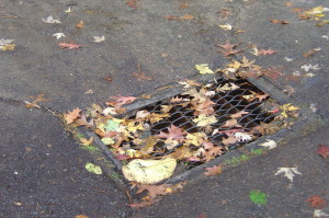 rsz_leaves_on_drain_002