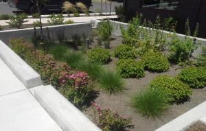 rsz_rain-garden2_arkitek-building-ashland_lori-tella-1024x768