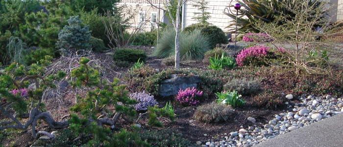 water-wise garden