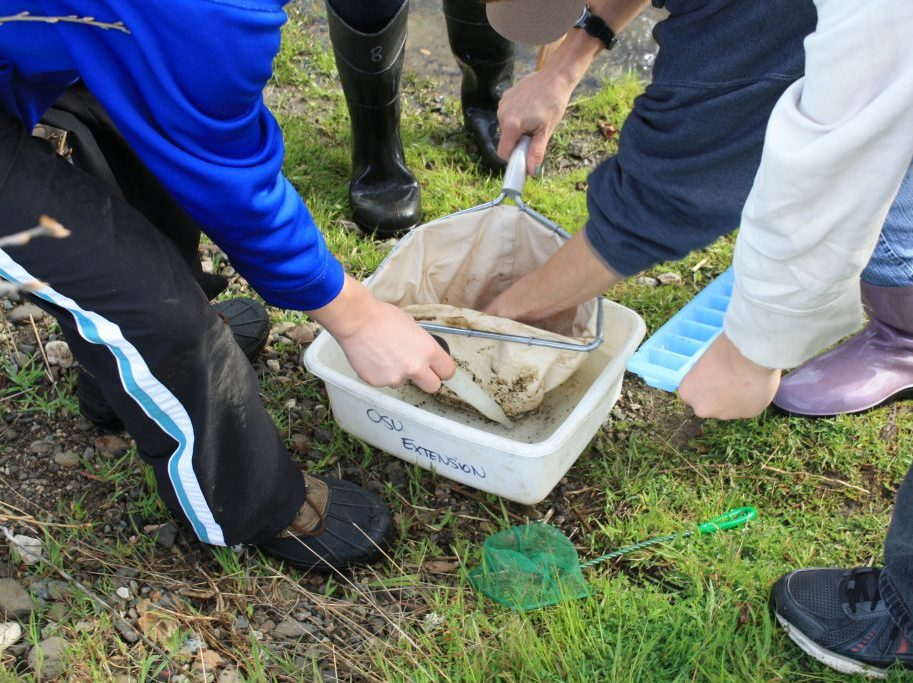 <b>Learning about stream macroinvertebrates</b>
